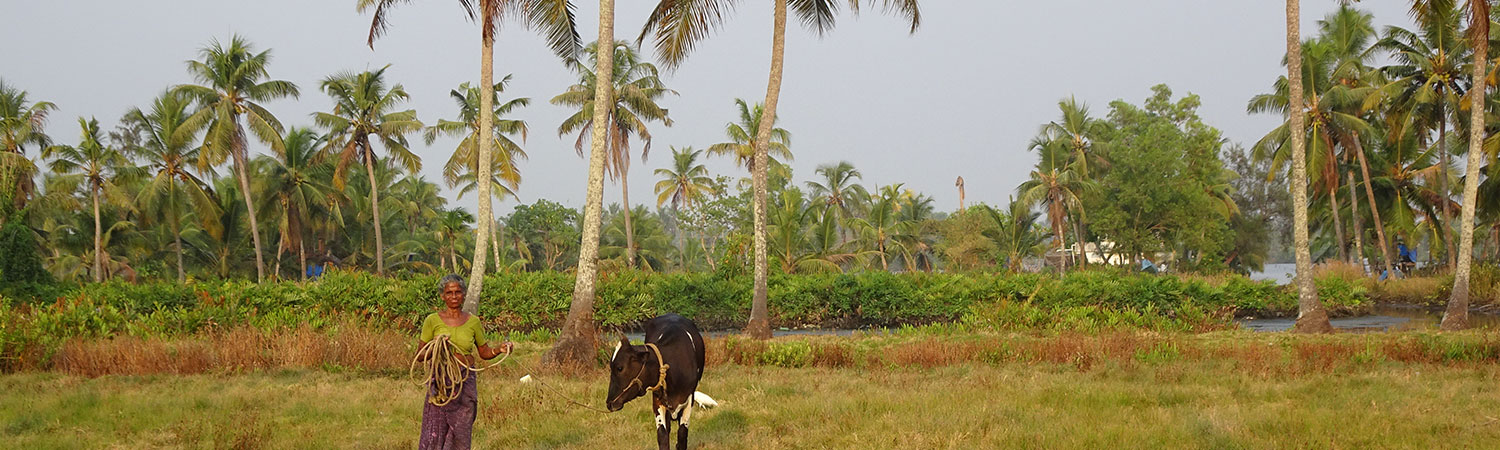 Pure-Kerala-Tours-banner-cow-palms