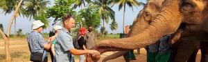 Pure-Kerala-Tours-banner-feeding-elephants