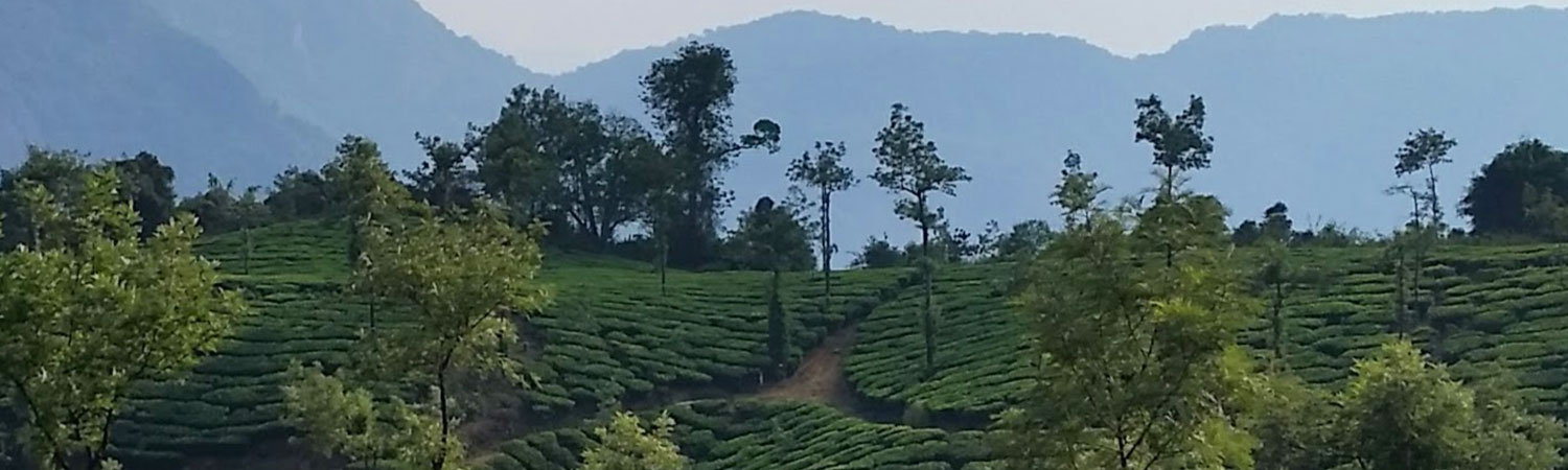 Pure-Kerala-Tours-banner-tea-estate
