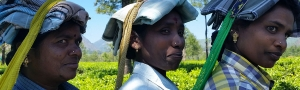 Pure-Kerala-Tours-banner-tea-pickers